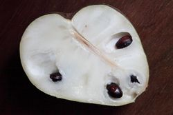 Lisa cherimoya (cutaway view), Santa Barbara Exotics, Carpinteria, California