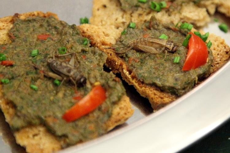 Cricket on crostini, Alimentary Initiatives Future Food Salon, West 26th Street, Manhattan