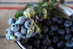 Bluecrop blueberries, Flying Fox, New Amsterdam Market, South Street, Manhattan