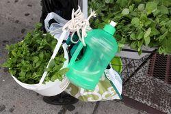 Itinerant herb vendor's pushcart, Elmhurst, Queens