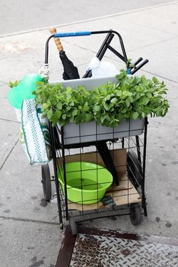 Itinerant herb vendor's pushcart, Elmhurst, Queens