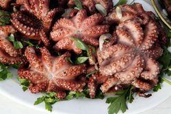 Octopus, Lucy's Palace, Santa Rosalia Society Festival, Bensonhurst, Brooklyn