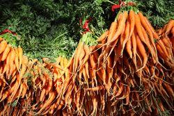 Carrots, S&SO Produce Farms, Union Square Greenmarket, Union Square, Manhattan