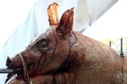 Crisp-eared spit-roasted pig, Holy Cross Greek Cultural Festival, Bay Ridge, Brooklyn