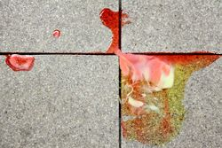 Spilled frozen confection, Melrose, Bronx
