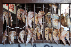 Fish hung out to air-dry, Chinatown, Manhattan