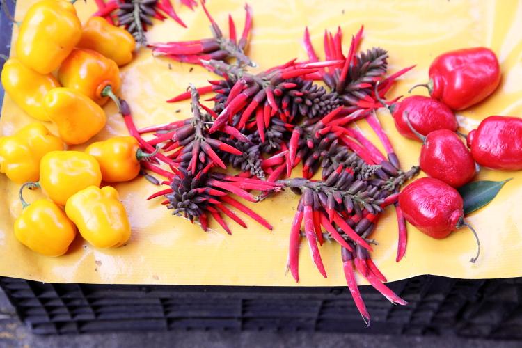 Flor de colorin  Mercado de Tepoztlan  Morelos  Mexico