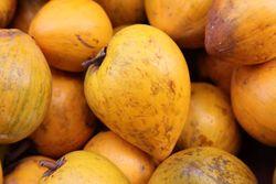 Eggfruit (canistels), Mulberry Street, Manhattan