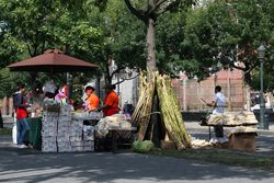 A coconut and sugarcane stall at the West Indian Day Parade, Eastern Parkway, Brooklyn