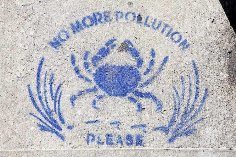 No more pollution please  storm-drain signage with crab  Sunnyside  Queens
