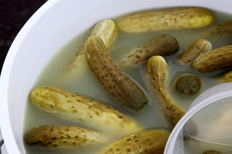 Horseradish pickles  Horman's Best Pickles  LIC Flea  Long Island City  Queens