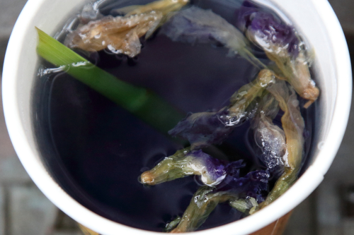 Butterfly pea flower tea  Rasa  Malaysia Food Fest  Confucius Plaza  Bowery  Manhattan