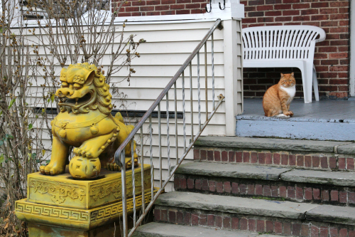 Lion and cat  Stamford  Connecticut