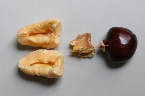 Ackee aril  with pith and seed removed  from a vendor in Williamsbridge  Bronx