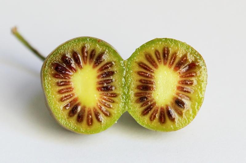 Hardy kiwi  Samascott Orchards  Columbia Greenmarket  Broadway  Manhattan