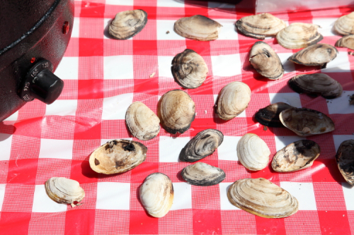 Empty shells (probably) left over from the preparation of steamer chowder  Lifestyles for the Disabled  Lighthouse Point Fest and Soup Tasting  St George  Staten Island