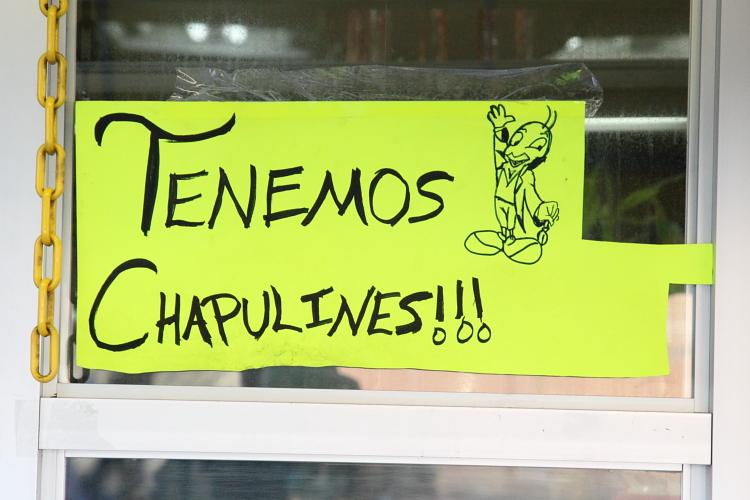 %22Tenemos chapulines%22 with hand-drawn image of Jiminy Cricket  Mott Haven  Bronx