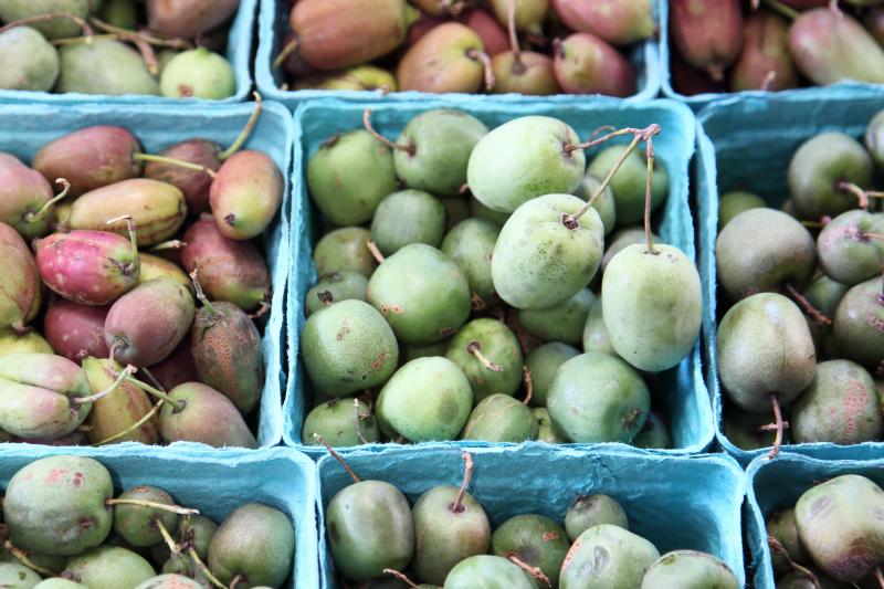 Hardy kiwis  Samascott Orchards  Columbia Greenmarket  Broadway  Manhattan