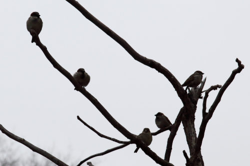 Birds on bare branches  Elmhurst  Queens