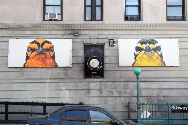 Blackburnian Warbler and Yellow-Throated Warbler (George Boorujy for the Audubon Mural Project  2017)  hand-drawn artwork above the West 157th St  station  Manhattan