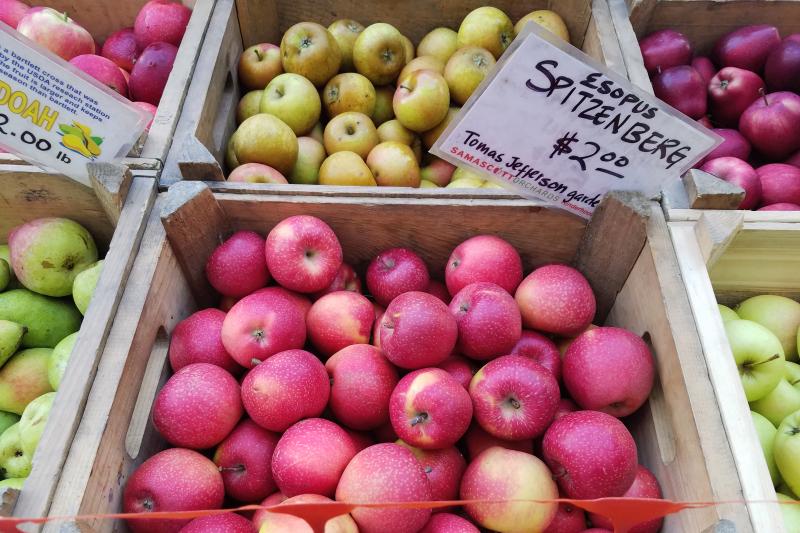 Esopus Spitzenburg apples  Samascott Orchards  Columbia Greenmarket  Broadway  Manhattan