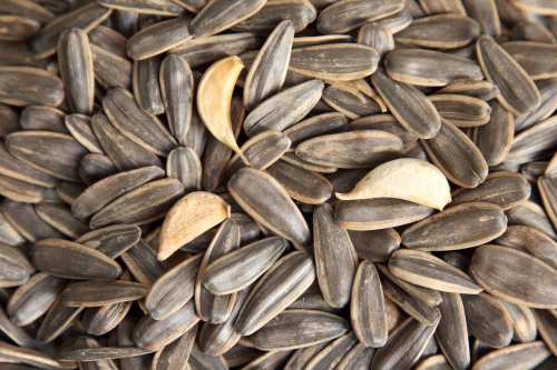 Point brand sunflower seeds roasted with ginger and garlic  Chaw Su Kyaw  Broadway Plaza  Elmhurst  Queens